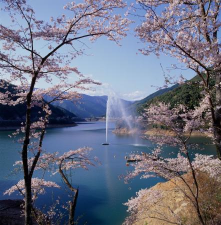 市房ダム2万本の桜と西米良温泉イメージ