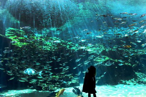九十九島大満喫!≪動物園・水族館・クルーズ・体験≫わくわくパールシーリゾートイメージ