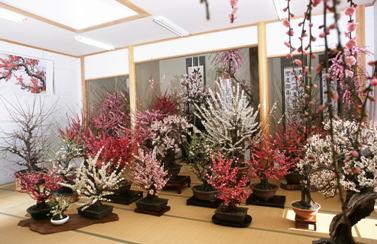 梅の香り漂うお座敷盆梅と四季彩膳イメージ