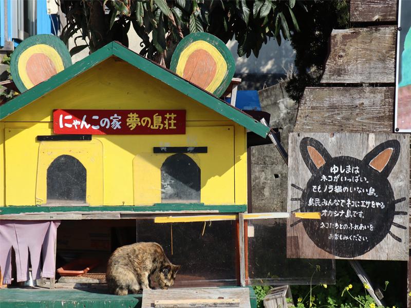 のんびり島旅 猫の島『湯島』 南風泊イメージ